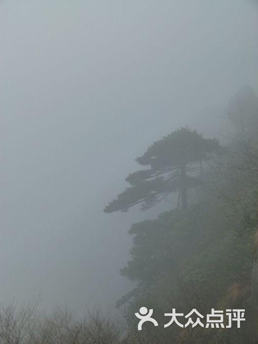 山上有许多松树长在悬崖峭壁之上