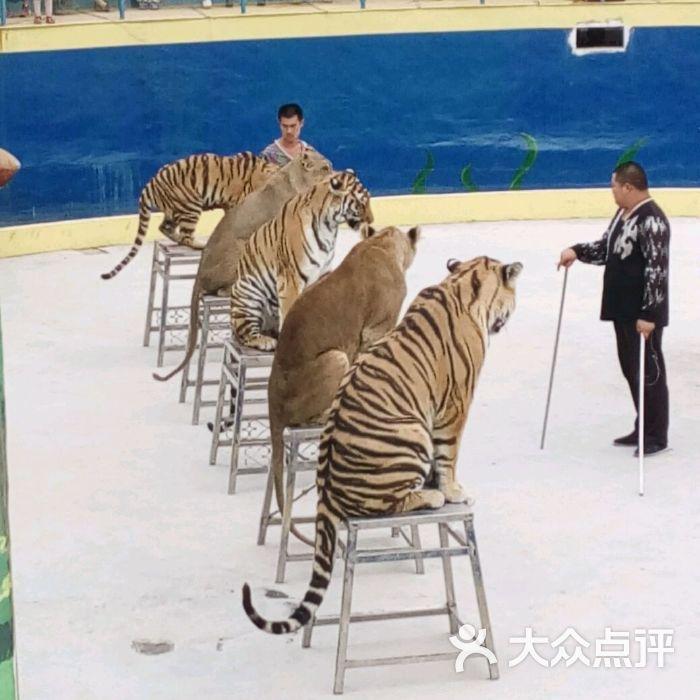 五龙山野生动物王国图片-北京动物园-大众点评网