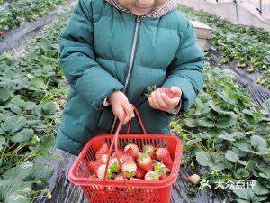 农兴草莓园