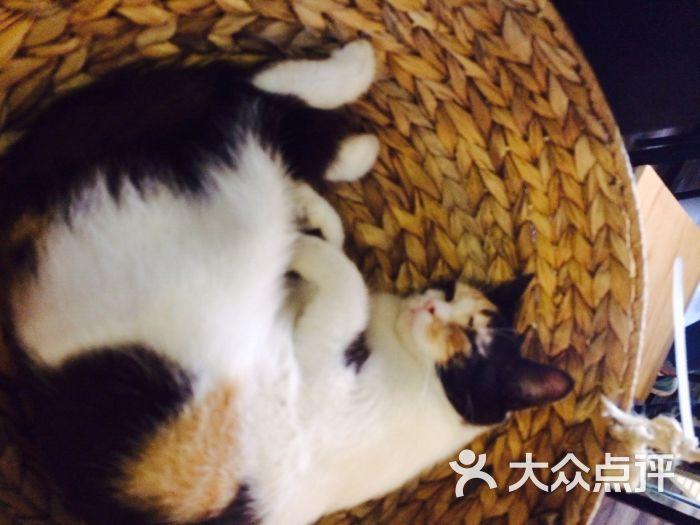 麒麟猫咪主题餐厅咖啡馆
