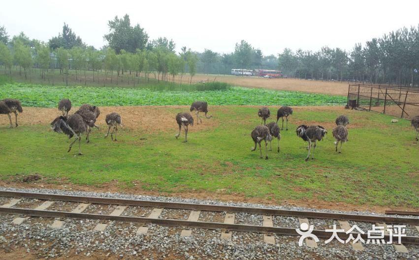 秦皇岛野生动物园图片 - 第3112张