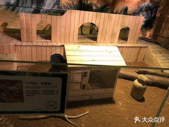 嗒咪动物奇幻乐园(杭州店)图片 - 第276张