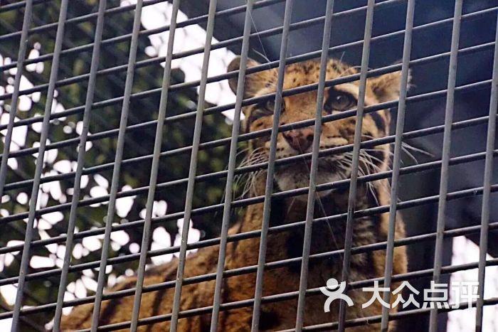 茶臼山动物园图片 - 第9张