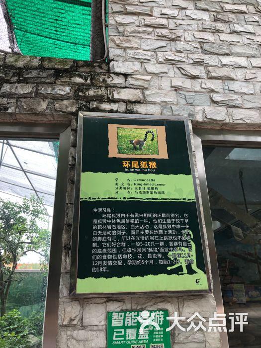 成都动物园景点图片 - 第6张