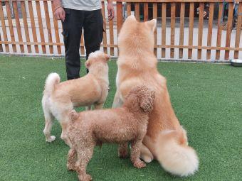 杭州联萌宠物训练学校训犬基地寄养