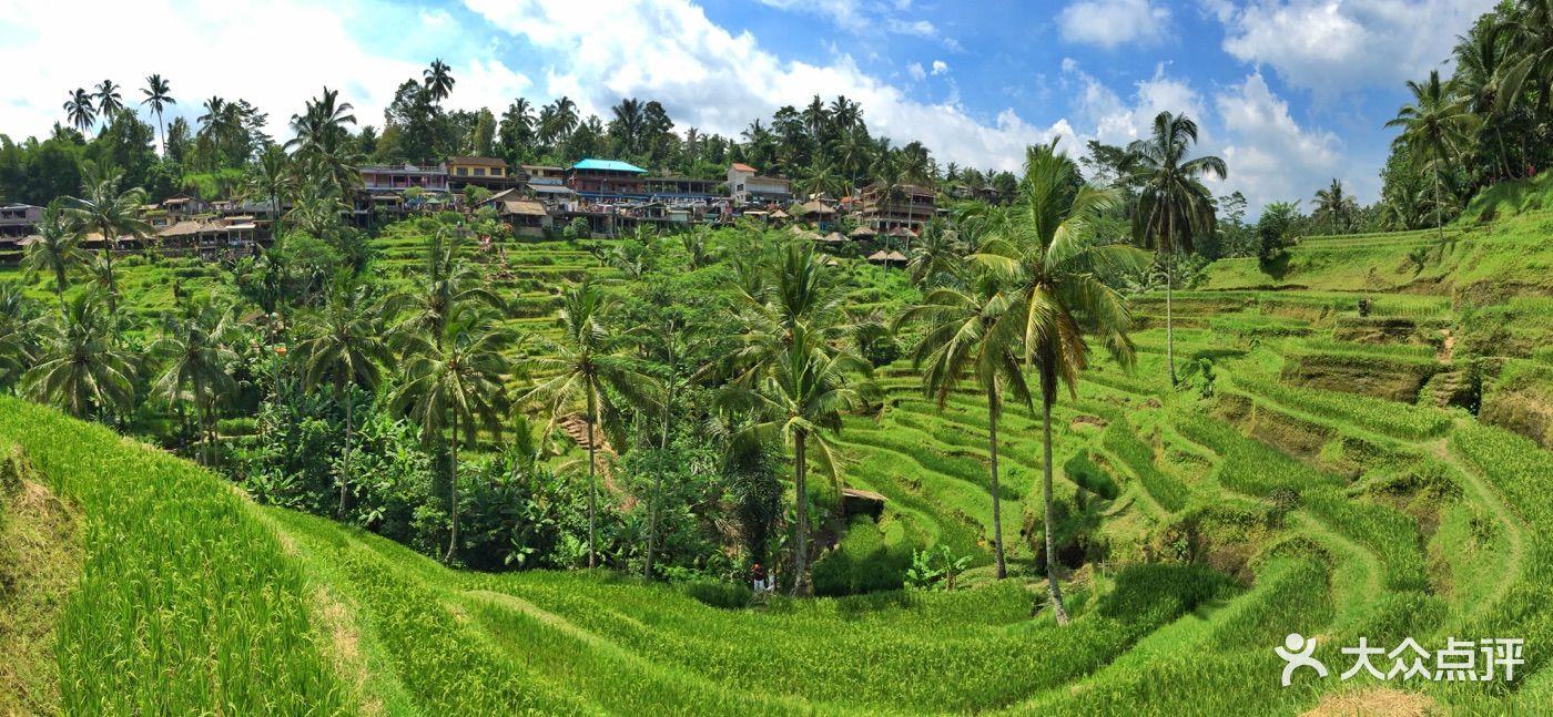 德格拉朗梯田-图片-巴厘岛景点玩乐-大众点评网