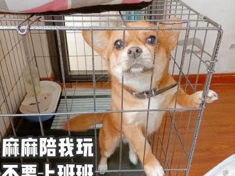 小叮当宠物诊所