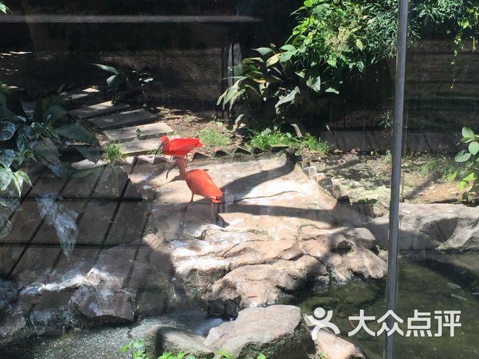 武汉动物园景点图片 - 第88张