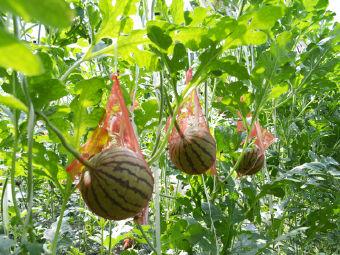 生宝谷物采摘园