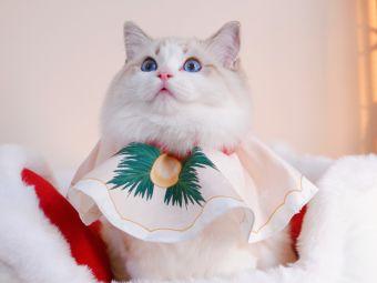 Sweet Peach布偶猫舍