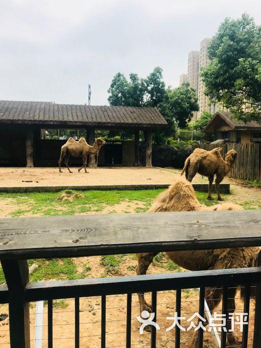 南昌新动物园图片 - 第4张