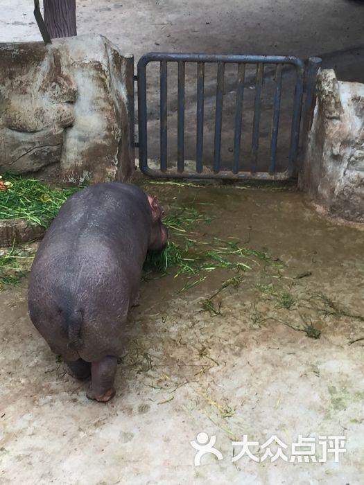 重庆动物园图片 - 第1005张