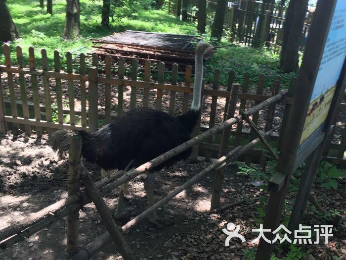 武汉动物园景点图片 - 第135张