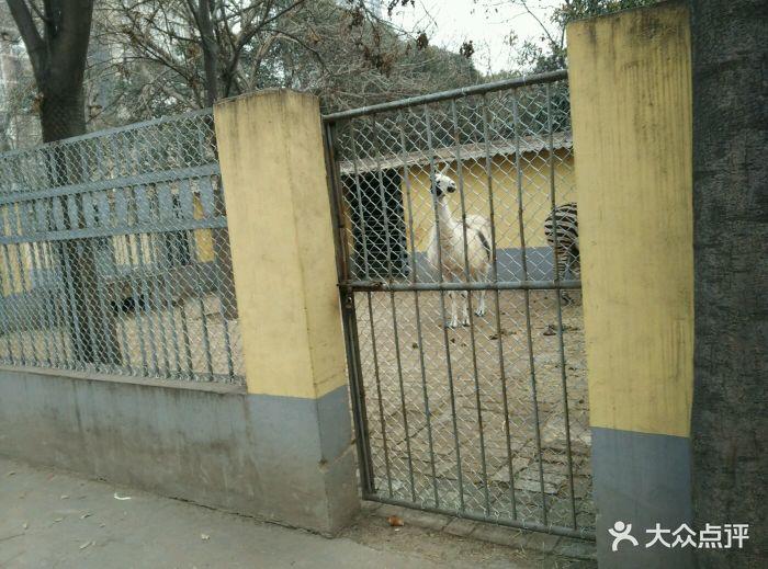 渭滨公园动物园图片 - 第50张