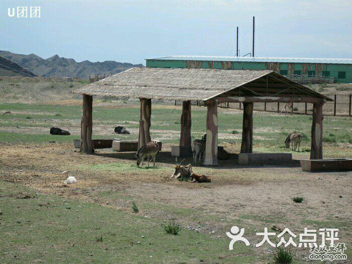 新疆天山野生动物园-图片-乌鲁木齐景点-大众点评网
