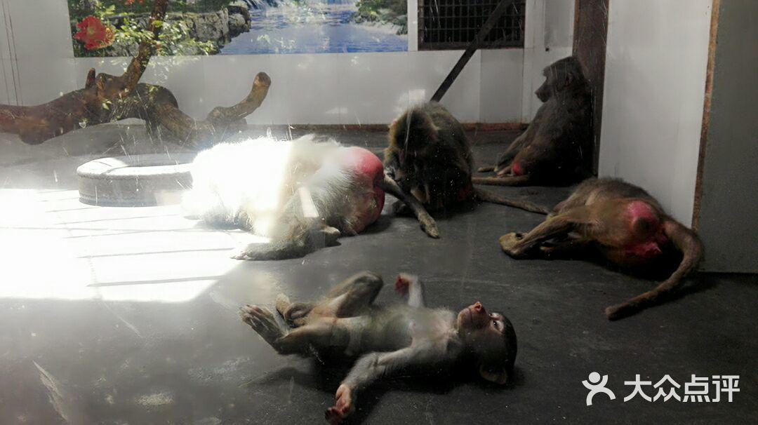 西安秦岭野生动物园的点评