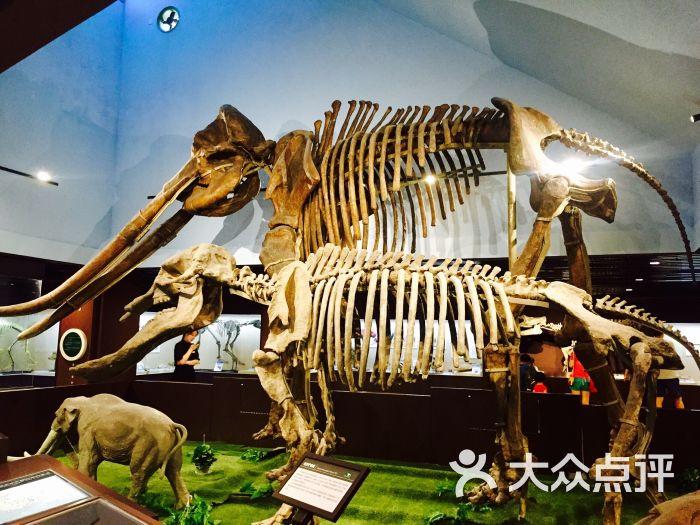 中国古动物馆图片 - 第623张