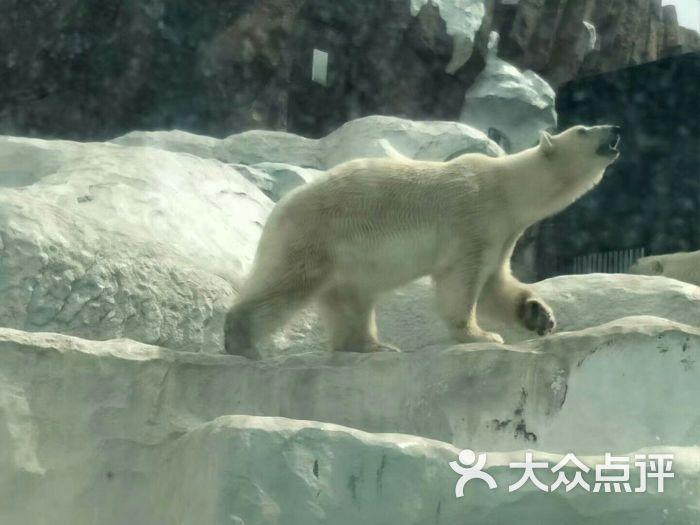 上野动物园图片 - 第7张