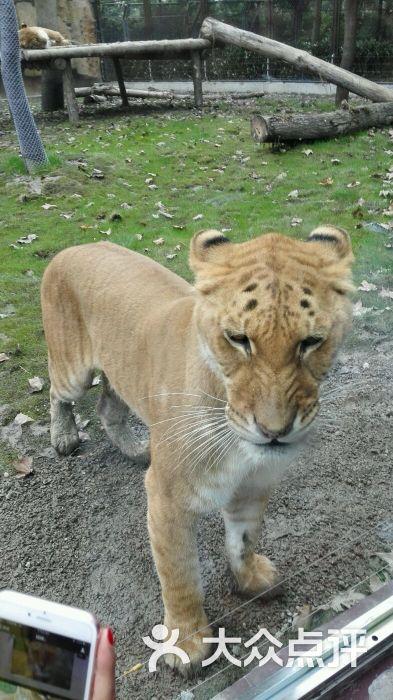 上海野生动物园图片 - 第15张