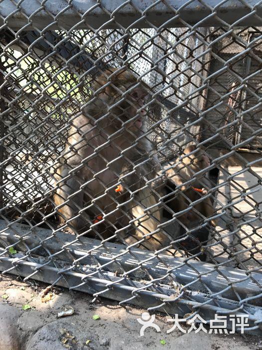 蟹岛爱心动物园图片 - 第252张