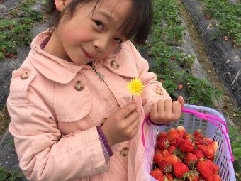 包阿姨草莓园