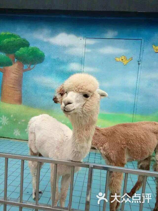 长沙生态动物园图片 - 第1张