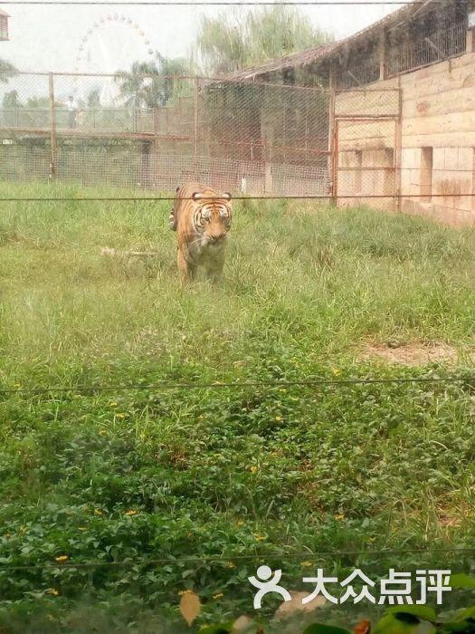 东莞寮步香市动物园图片 - 第43张
