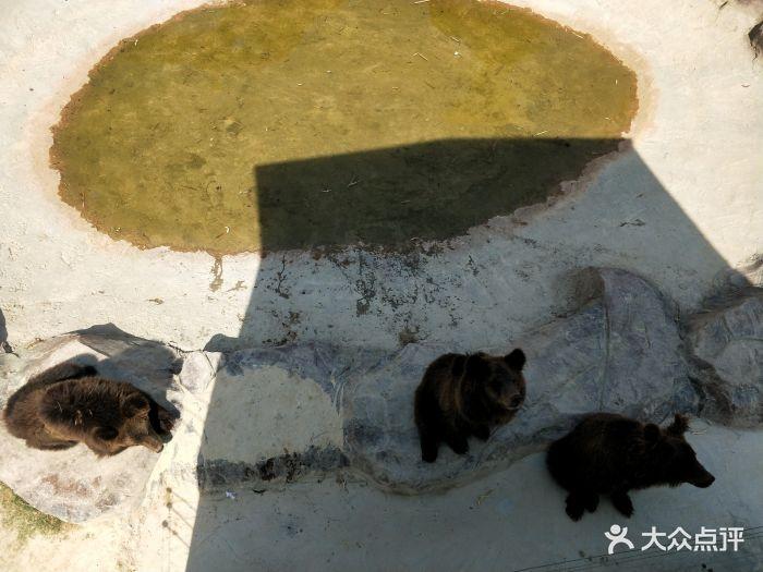 永鸿野生动物世界图片 - 第95张