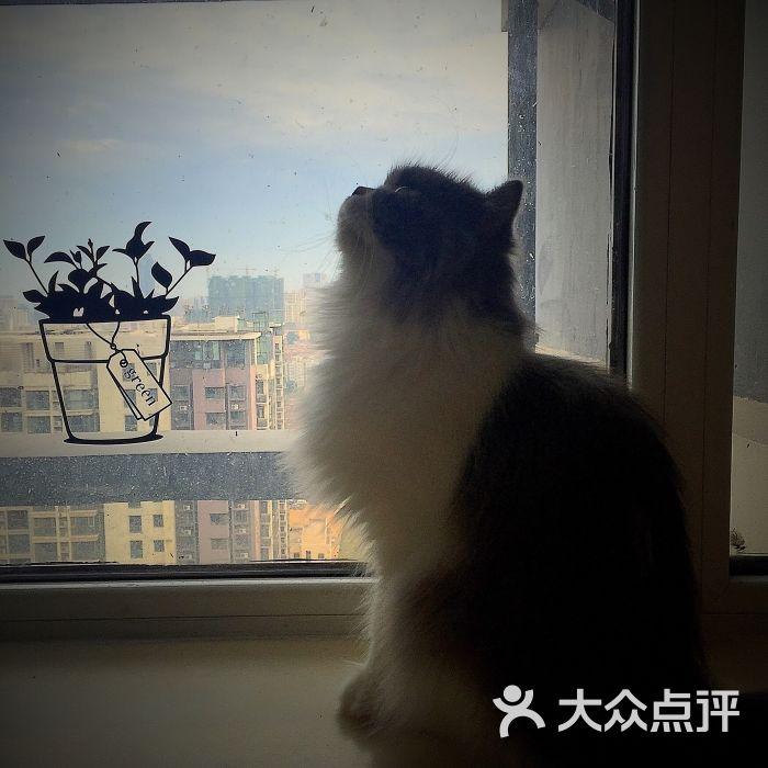 cc猫咪主题咖啡-图片-青岛美食-大众点评网