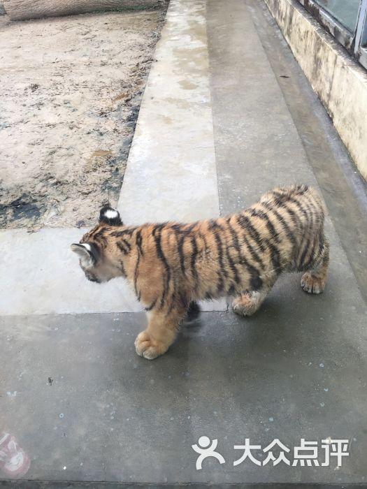苏州动物园图片 - 第538张