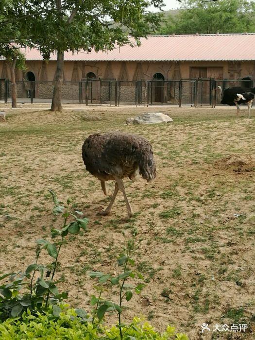 石家庄动物园图片