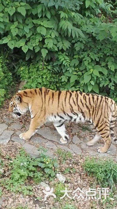 武汉动物园的全部评价(第2页)-武汉-大众点评网