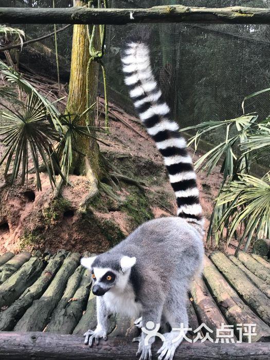 碧峰峡野生动物园图片 - 第1张