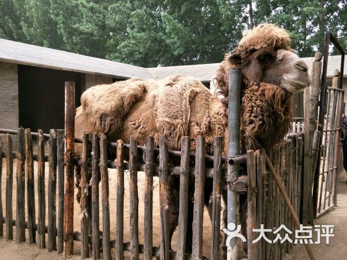 蟹岛爱心动物园图片 - 第9张