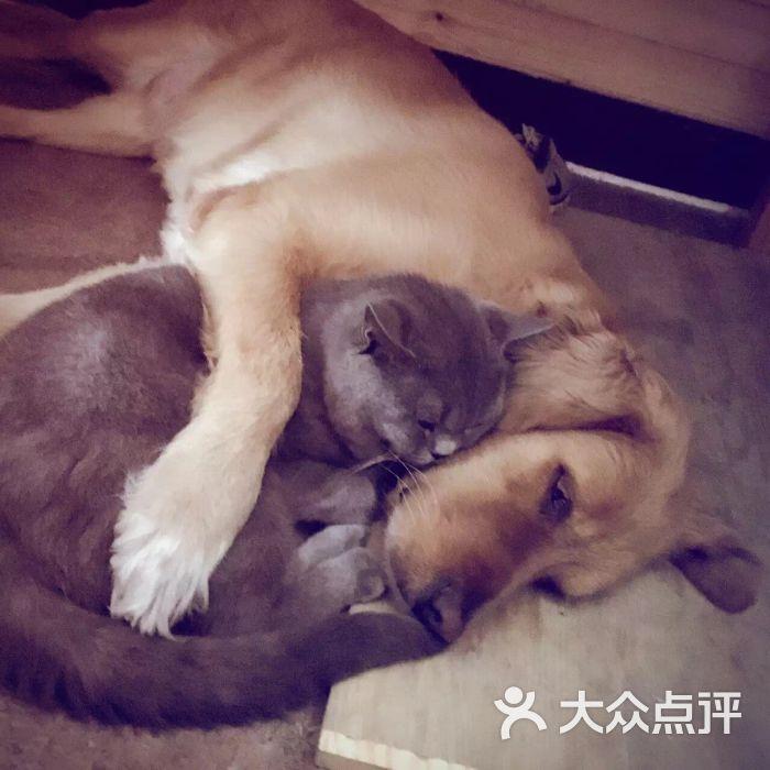 方庄伴侣动物医院-图片-北京宠物-大众点评网