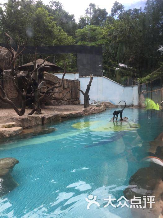 深圳野生动物园图片 - 第67张