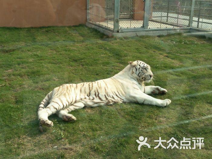 宿州野生动物园图片 - 第11张