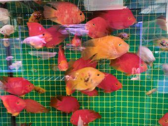 花与鱼花卉观赏鱼