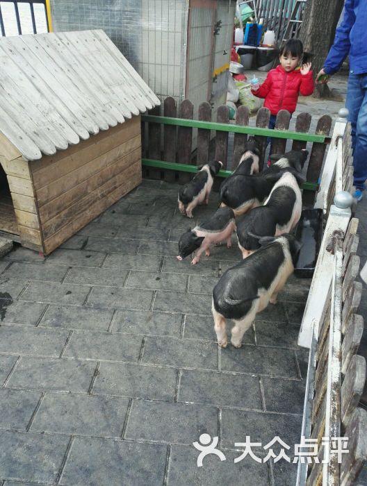 朝阳公园亲子动物园-图片-北京-大众点评网