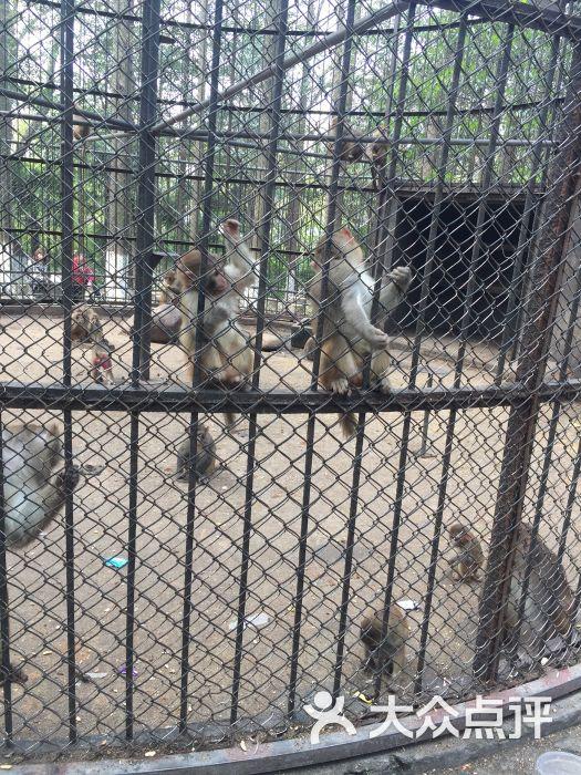 南通动物园图片 - 第28张