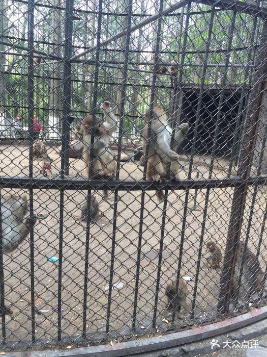 南通动物园图片 - 第29张