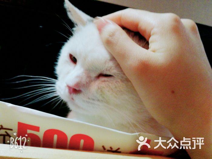 贝斯特宠物猫咪咖啡馆图片 - 第25张