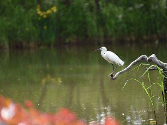 新优游登陆湾湿地生态观鸟拍鸟基地