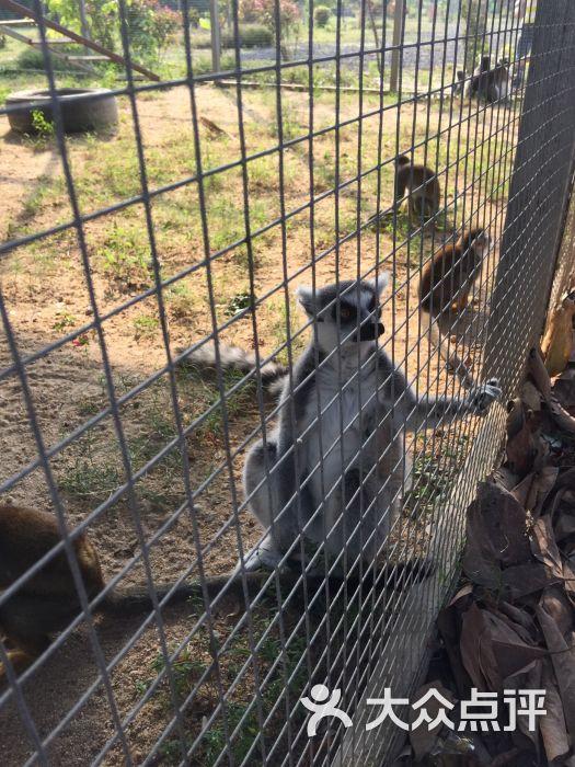海口天鹅湖动物乐园图片 - 第6张
