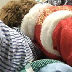 电话 地址 价格 营业时间 解放公园宠物医院团购 武汉宠物