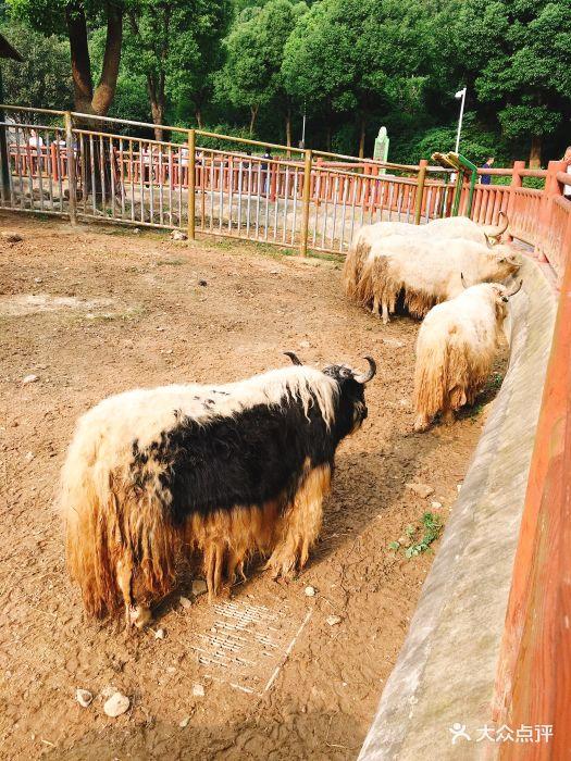 无锡动物园·太湖欢乐园景点图片 - 第51张