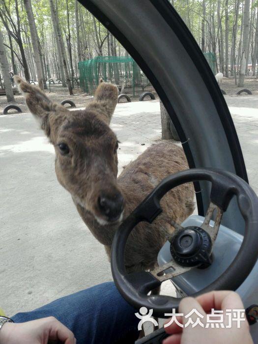 北京野生动物园自驾迷你散放区-图片-北京周边游-大众