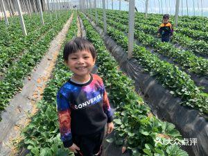 蟠桃大公沙草莓园