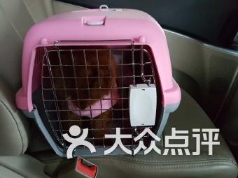 心连心宠物诊所