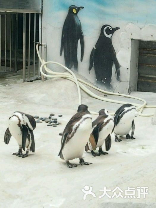红山森林动物园企鹅?图片 - 第3179张